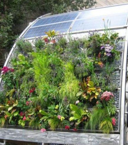 Гидрогель для растений и цветов