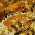 Пчелиный хлеб