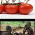 О вреде ГМО продуктов