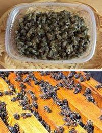 применение пчелиного подмора в народной медицине
