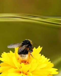 Лечебная цветочная пыльца
