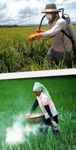 продукты с пестицидами