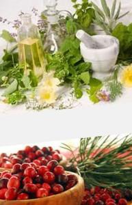 лечебные растения антибиотики