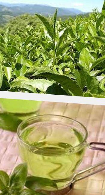 какие травы помогают при повышенном холестерине