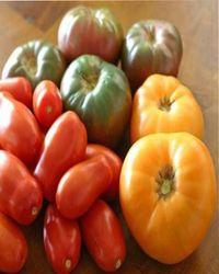 вред томатов