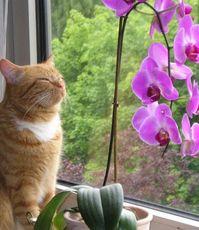 чем полезны цветы в доме