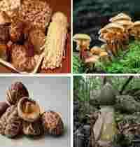 как лечиться грибами