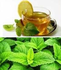 польза чая с мелиссой