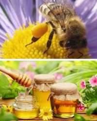 пчелиные продукты в лечебных целях