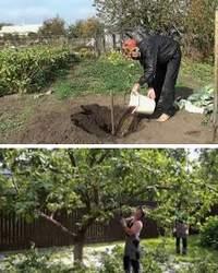 Разведение фруктовых деревьев, уход за ними, формирование сада