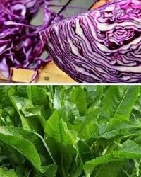 Разведение и выращивание полезных растительных культур