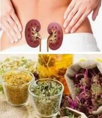 Почечнокаменная болезнь, ее лечение народными средствами