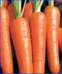Морковь посевная, ее пищевые и целебные свойства