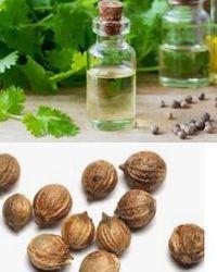 Масло кориандра - польза и применение